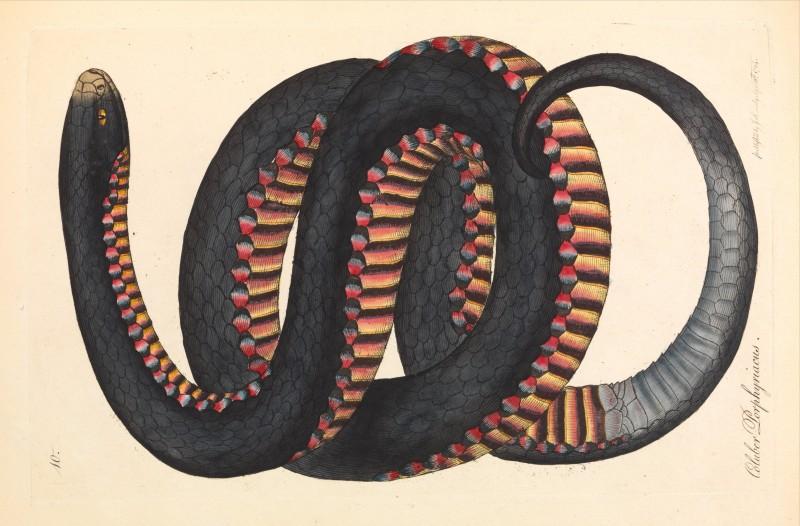 Badanti serpenti rivista studio for Quota legittima figli