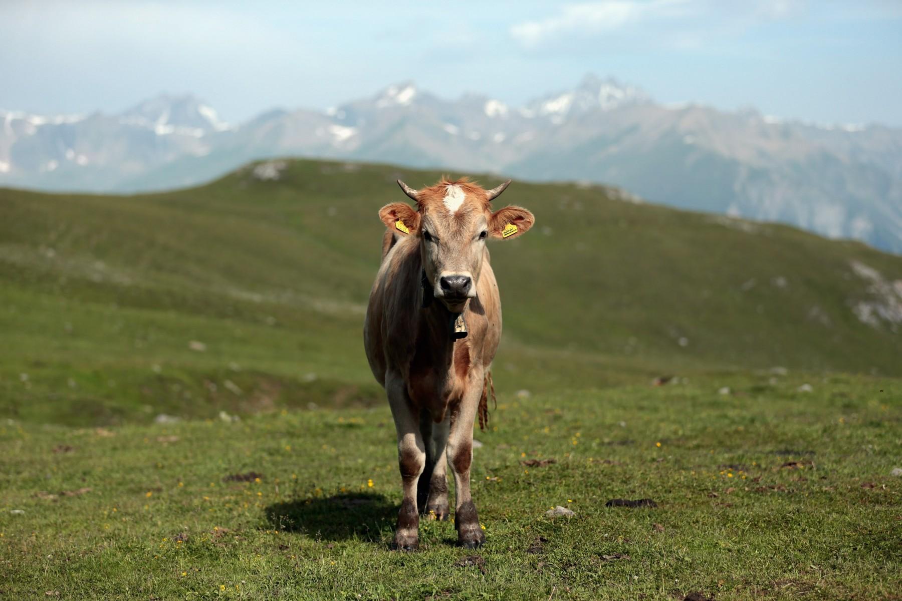 La cittadinanza ai sudtirolesi è un atto ostile verso l Italia  e082b6ac2995b