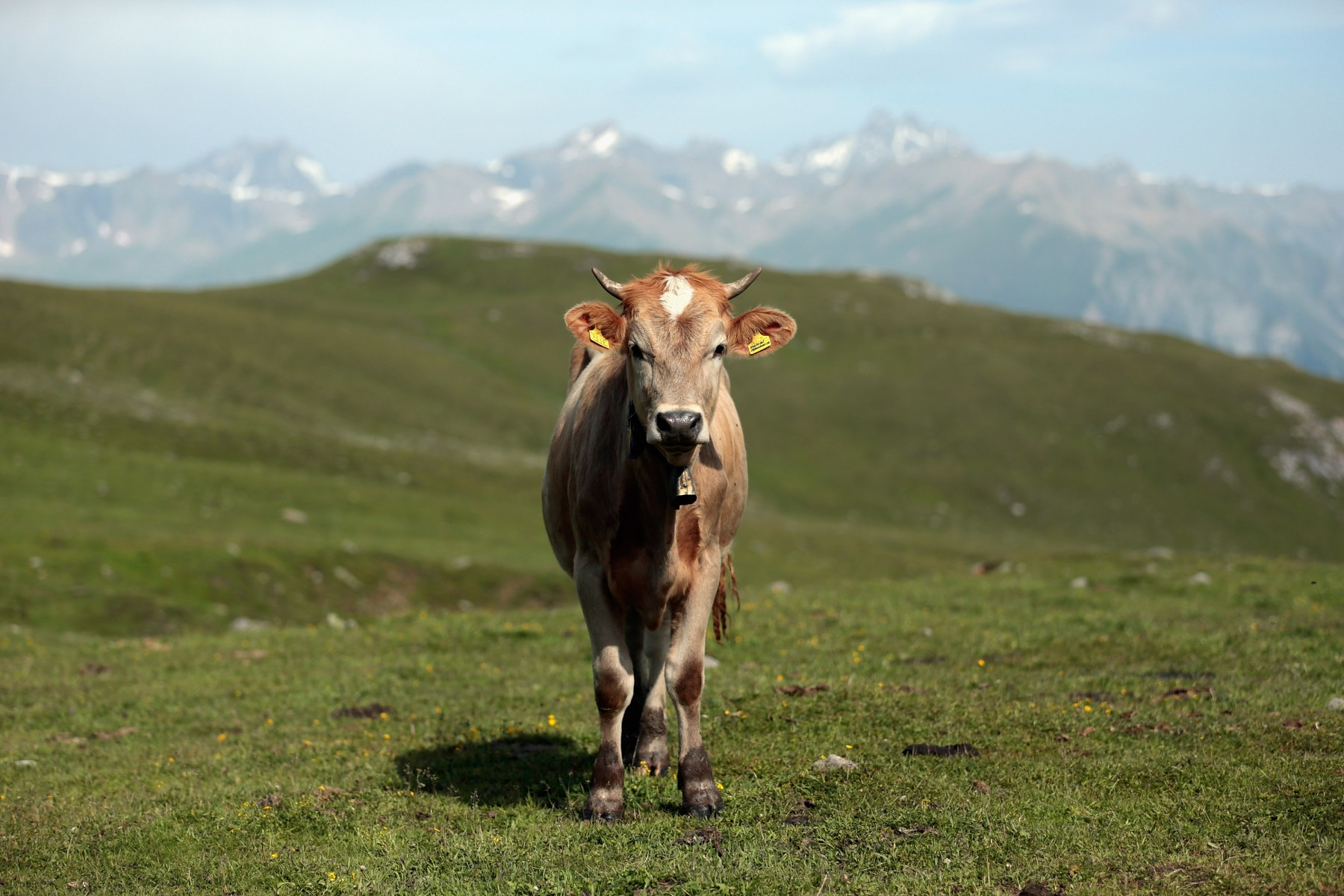Alto Adige Sudtirolo